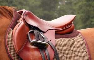 Equine Leather Products